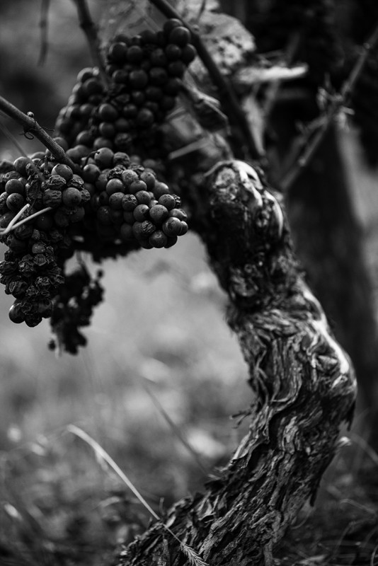 Habillage de porte pied de vigne fabulhouse kitchen - Acheter pied de vigne ...